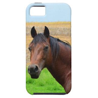 Brown-Pferd auf einem Gebiet Tough iPhone 5 Hülle