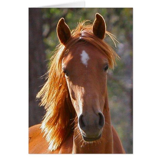 Brown-Pferd im Sonnenlicht Karte