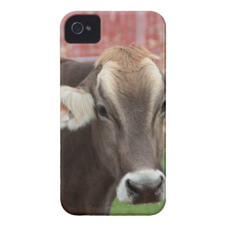 Brown-Schweizer-Kuh iPhone 4 Cover