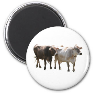 Brown-Schweizer-Kühe Runder Magnet 5,7 Cm