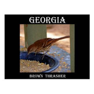 Brown Thrasher (Georgia) Postkarte