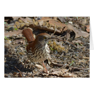 Brown Thrasher Karte