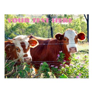 Brown und weiße Milchkuh-Vieh-Färsen-Tiere Postkarte