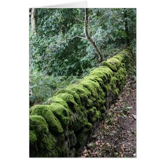 Bruchsteinwand bedeckt im Moos Karte