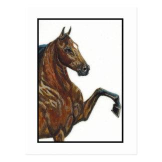 Bucht-Geschirr-Pony 3 Postkarte