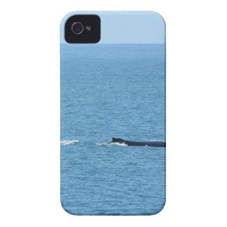 BUCKEL-WAL MACKAY QUEENSLAND AUSTRALIEN Case-Mate iPhone 4 HÜLLE