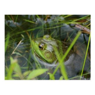 Buckfield Frosch Postkarte