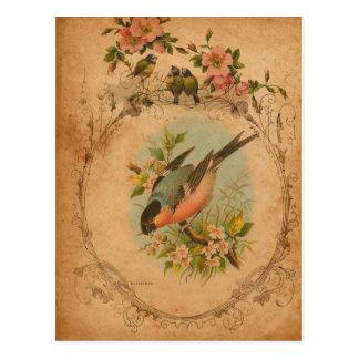 Bullfinch Postkarte