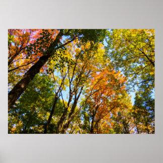 Bunte Bäume des Herbst-2017% pipe% Poster