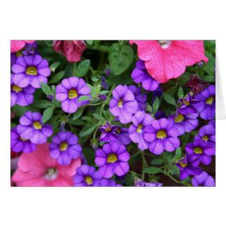 [Bunte Blumen] Calibrachoa - irgendeine Karte