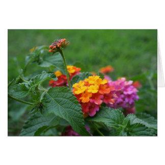 [Bunte Blumen] Lantana camara - irgendeine Karte