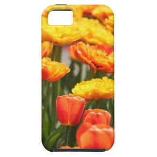 Bunte Blumen-Vielzahl iPhone 5 Case