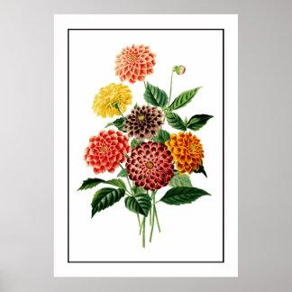 Bunte botanische Blumen-Illustration Poster