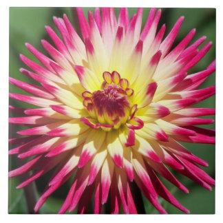 Bunte Dahlie mit Blumen Große Quadratische Fliese