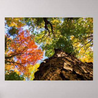 Bunte Herbst-Bäume Poster