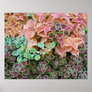 Bunte Regenbogen-Buntlippen-Pflanzen-Fotografie Poster