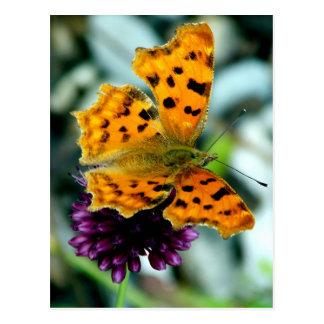 Bunte Schmetterlings-Blüten-Blumen-wunderliche Postkarte