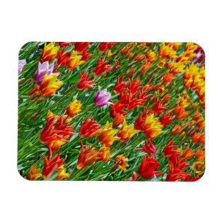 Bunter Frühlingstulpe-Druckmagnet Magnet