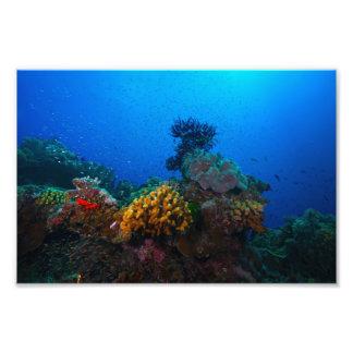 Bunter korallenrotes SeeFoto-Druck Fotografischer Druck
