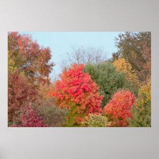 Buntes Fall-Baum-Foto Poster