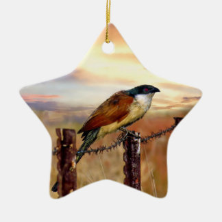 Burchells Coucal Kuckuckvogel Keramik Ornament