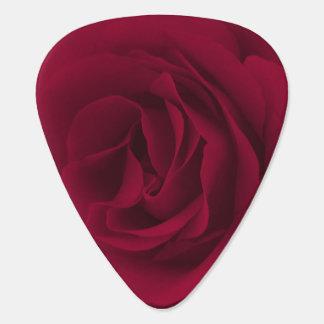 Burgunder-Rose Plek