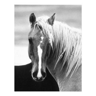 BW-Pferdeporträt Flyerbedruckung