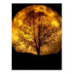Cadeaux éffrayants de destin d'automne d'arbre de  cartes postales