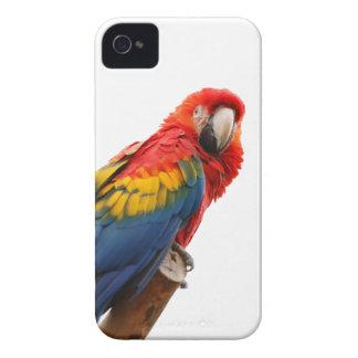 Caisse audacieuse de belle mûre d'oiseau de perroq coques iPhone 4 Case-Mate