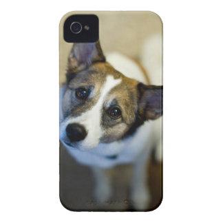 Caisse audacieuse de Blackberry de chien mignon Coques Case-Mate iPhone 4