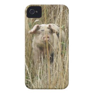 Caisse audacieuse de Blackberry de porc tacheté mi Coques iPhone 4 Case-Mate