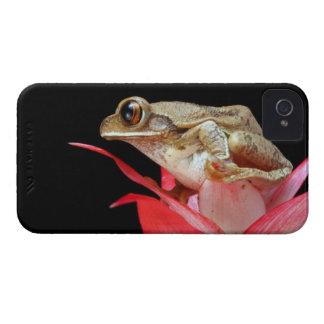 Caisse audacieuse de fleur de grenouille de mûre m étuis iPhone 4
