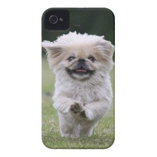 Caisse audacieuse de mûre de chien de Pekingese, p Coque Case-Mate iPhone 4