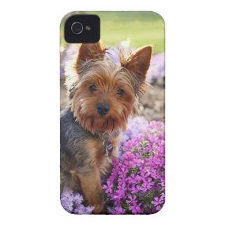 Caisse audacieuse de mûre mignonne de chien de Yor Coques Case-Mate iPhone 4