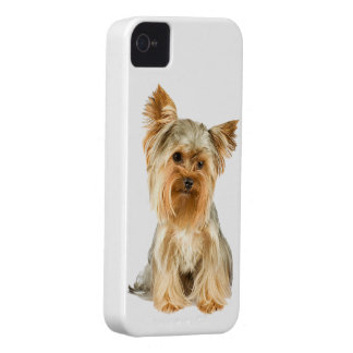 Caisse audacieuse de mûre mignonne de chien de Yor Étui iPhone 4