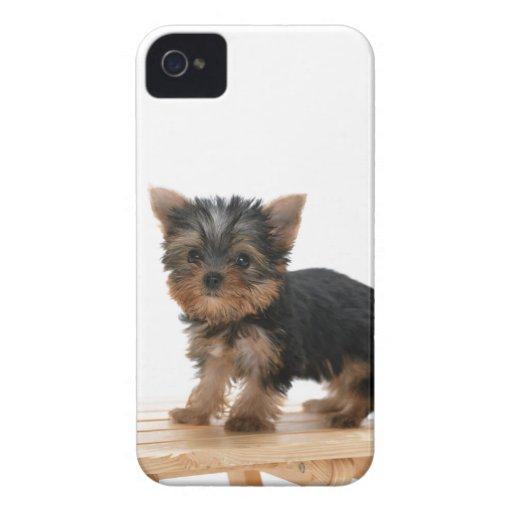Caisse audacieuse de mûre mignonne de chien de Yor Coques iPhone 4