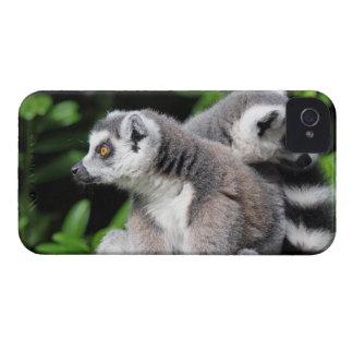 Caisse audacieuse de mûre mignonne de photo anneau coque iPhone 4 Case-Mate