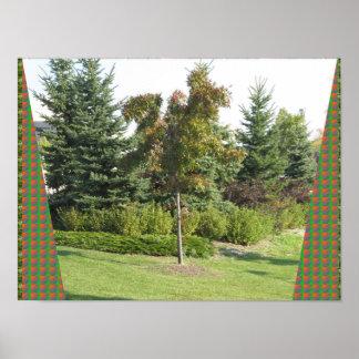 Candian wilder Garten parkt Herbstfarbenbaumgrün Poster