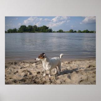 Capo von Oppenheim, Jack Russell Dog Poster