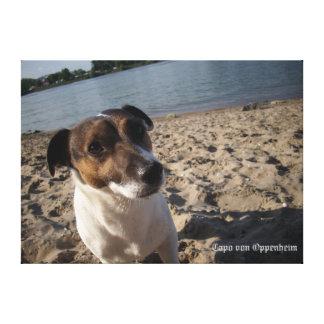 Capo von Oppenheim, Jack-Russell-Terrier, Hund Leinwanddruck
