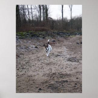 Capo von Oppenheim, Jack-Russell-Terrierhund Poster