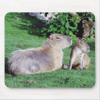Capybara-Mamma und Sohn Mousepad