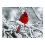 Cardinal rouge dans la carte postale de neige
