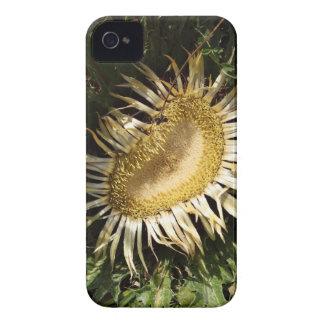 Carline Distel (Carlina acanthifolia) iPhone 4 Hüllen