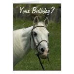 Carte d'anniversaire de cheval blanc