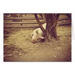 Carte de voeux de porc de Sleepyhead vide