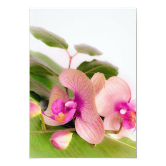 Carte orchid pink
