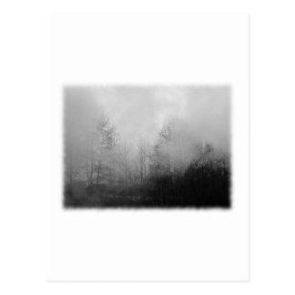 Carte Postale Arbres en brume. Noir et blanc.