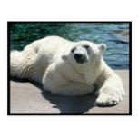Carte postale arctique d'ours blanc