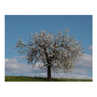Carte Postale Cerisier avec des fleurs
